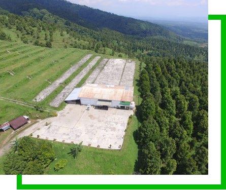 Perkebunan Cengkeh Di Jawa Barat
